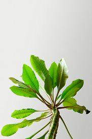 Houseplant Euphorbia. Succulent Plant. Vertical Orientation Bottom View