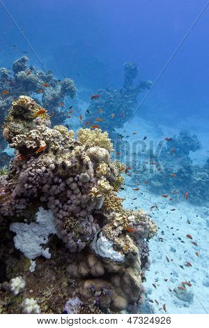 coral reef at the bottom of tropical sea on blue water background poster