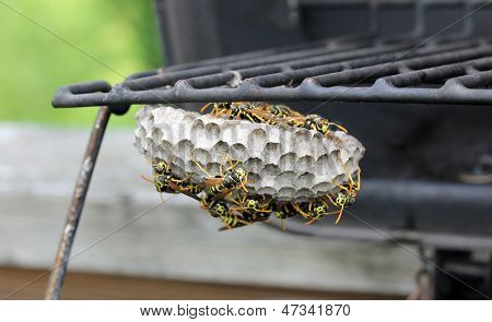 Beehive of Yellowjackets