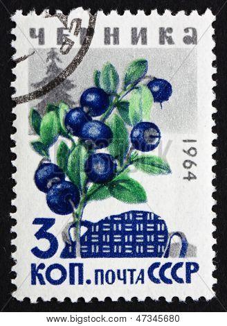Postage Stamp Russia 1964 Huckleberries, Billberries