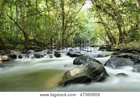 Tropical River In The Jungle