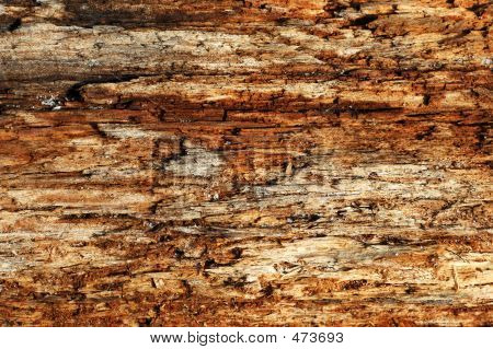Texture Of Wood Grain