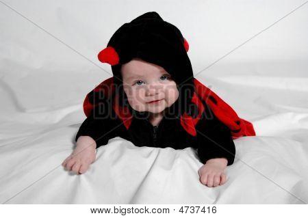 Baby dress in ladybug costume posed in studio. poster