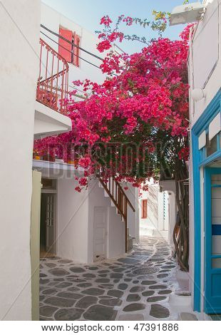 Blooming Bougainvillaea About Storefront On The Street Of The Island Of Mykonos In Greece.