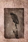 Crow perched on dead tree branch rendered in atmospheric sepia tones with surrounding grunge border. poster