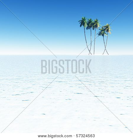 Coconut Palms On Small Island