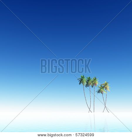 Coconut Palms By The Sea