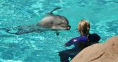 A Blonde Female Trainer Works with a Bottlenosed Dolphin in the Water poster