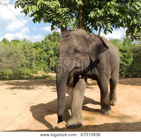 Elefant outdoor