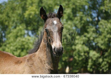 Portrait of a pretty foal in summer pasture