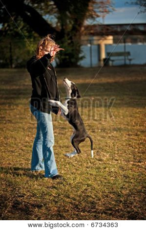 Woman With Dog Doing Tricks