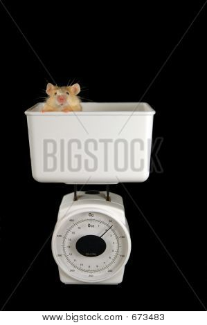 Mouse On Scale