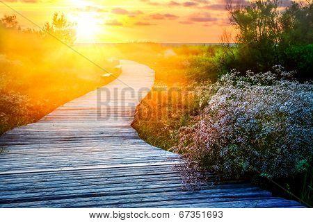 Wooden path at a beach
