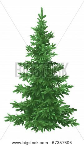 Christmas fir tree, isolated