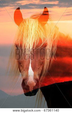 Double Exposured Horse Portrait