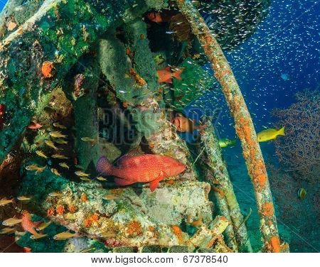 Coral Grouper and glassfish around an underwater wreck poster