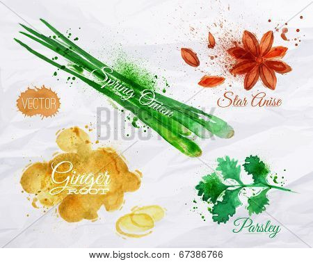 Spices herbs watercolor star anise, parsley, spring onion, ginger root