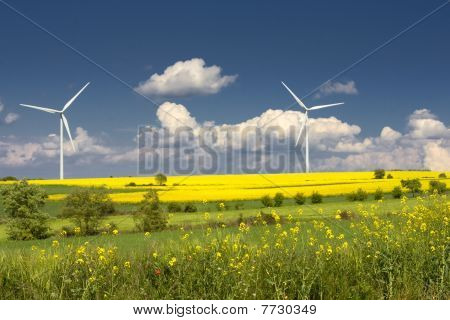 rapeseed field and wind turbines