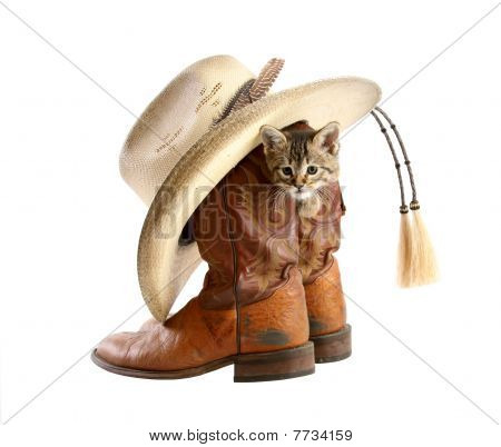 Kitten playing in Cowboy Boot with Hat