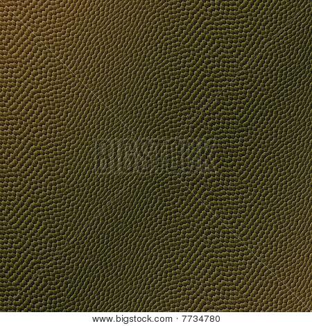 Reptile Skin Texture