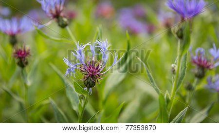 Wild Flowers UK