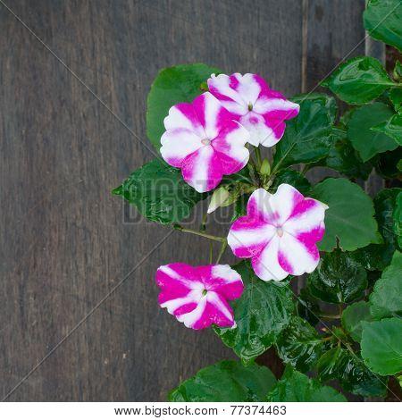 Impatiens Flower On Wooden Background