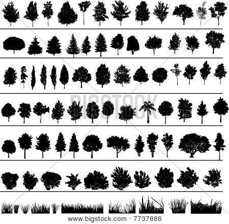 Árvores, arbustos, grama