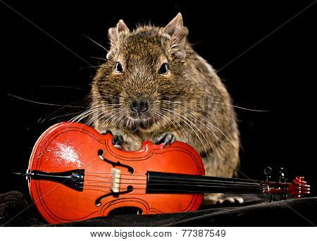 Small Rodent With Cello
