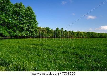 Prairie Edged by Trees