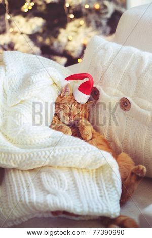 Lovable ginger cat wearing Santa Claus hat sleeping on chair under Christmas tree at home poster
