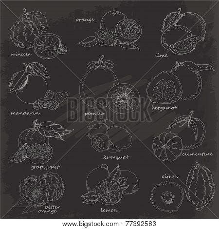 Set Of Citrus Fruits. Vector Hand Drawing Sketch Illustration On Black Background