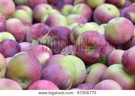 Apples Empire Fraichement Picked