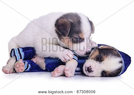 Clothing Puppies Mestizo Resting