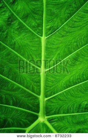 Close Up green Leap Pattern
