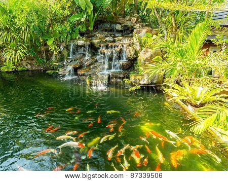 koi carp fishes in the pond of Phuket Botanical Garden at Phuket island Thailand