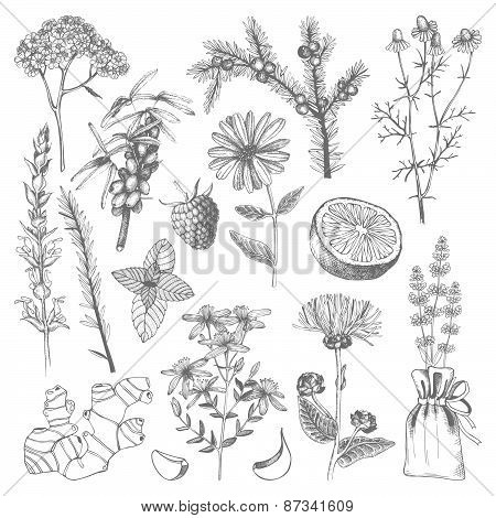 Herbs and spice set