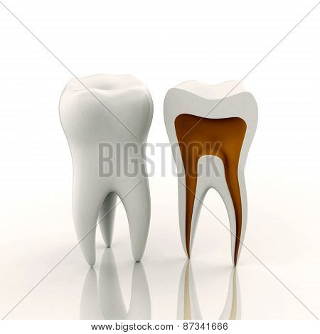 One Full And One Sliced Tooth