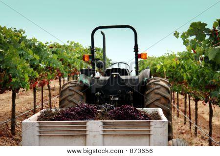 Truck At A Vineyard