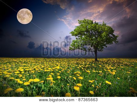 Night and the moon on a yellow flowers field
