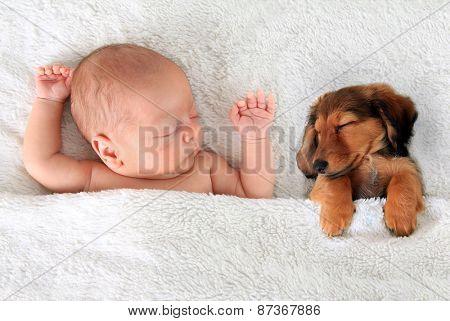 Newborn baby and a dachshund puppy sleeping together.