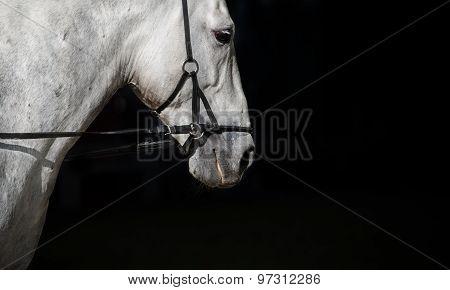 Spanish Horse On A Black