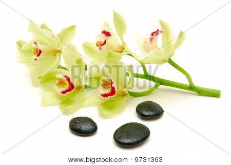 Green Orchids With Massge Stones