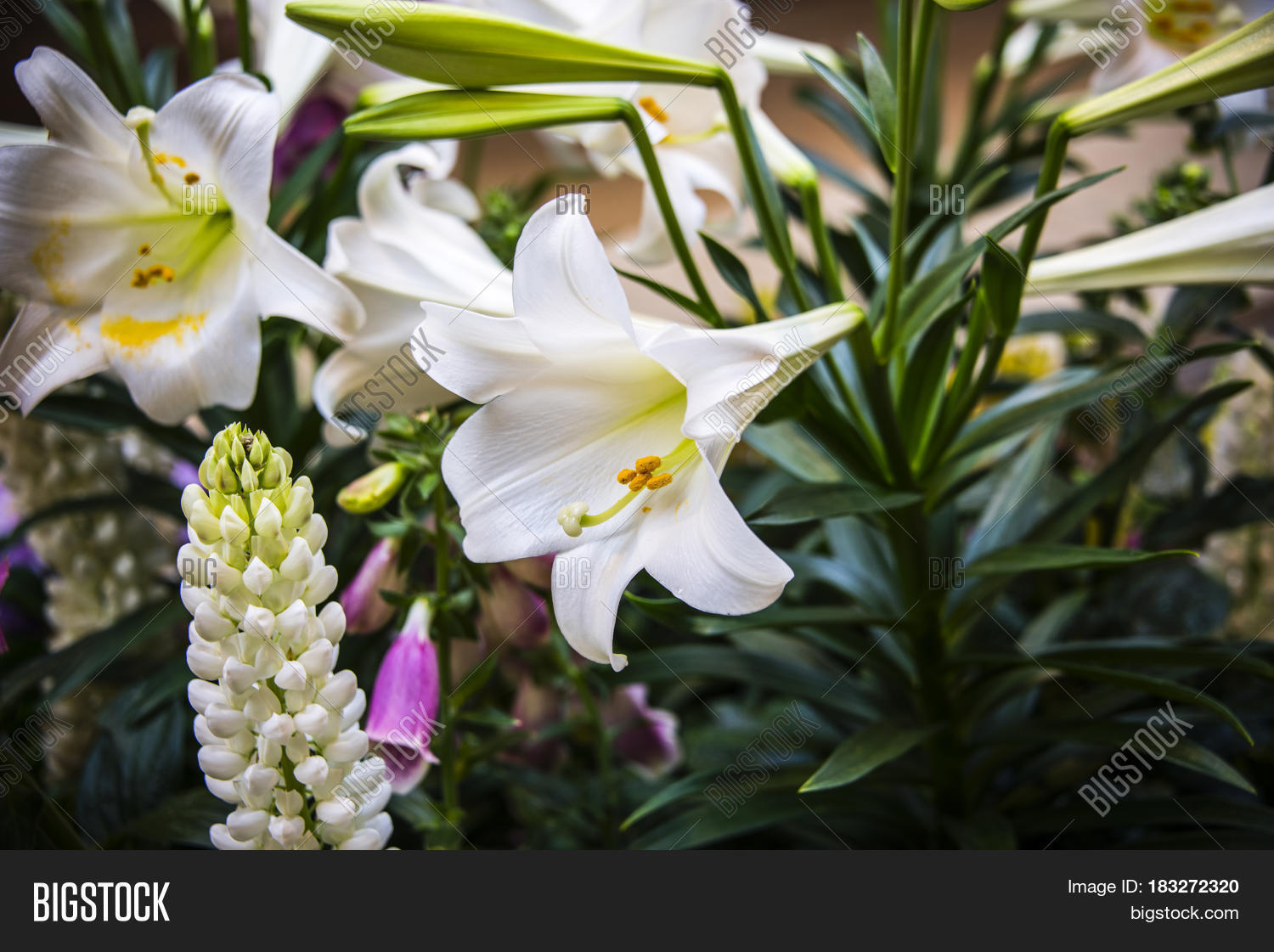 Flowers Flowers Image Photo Free Trial Bigstock
