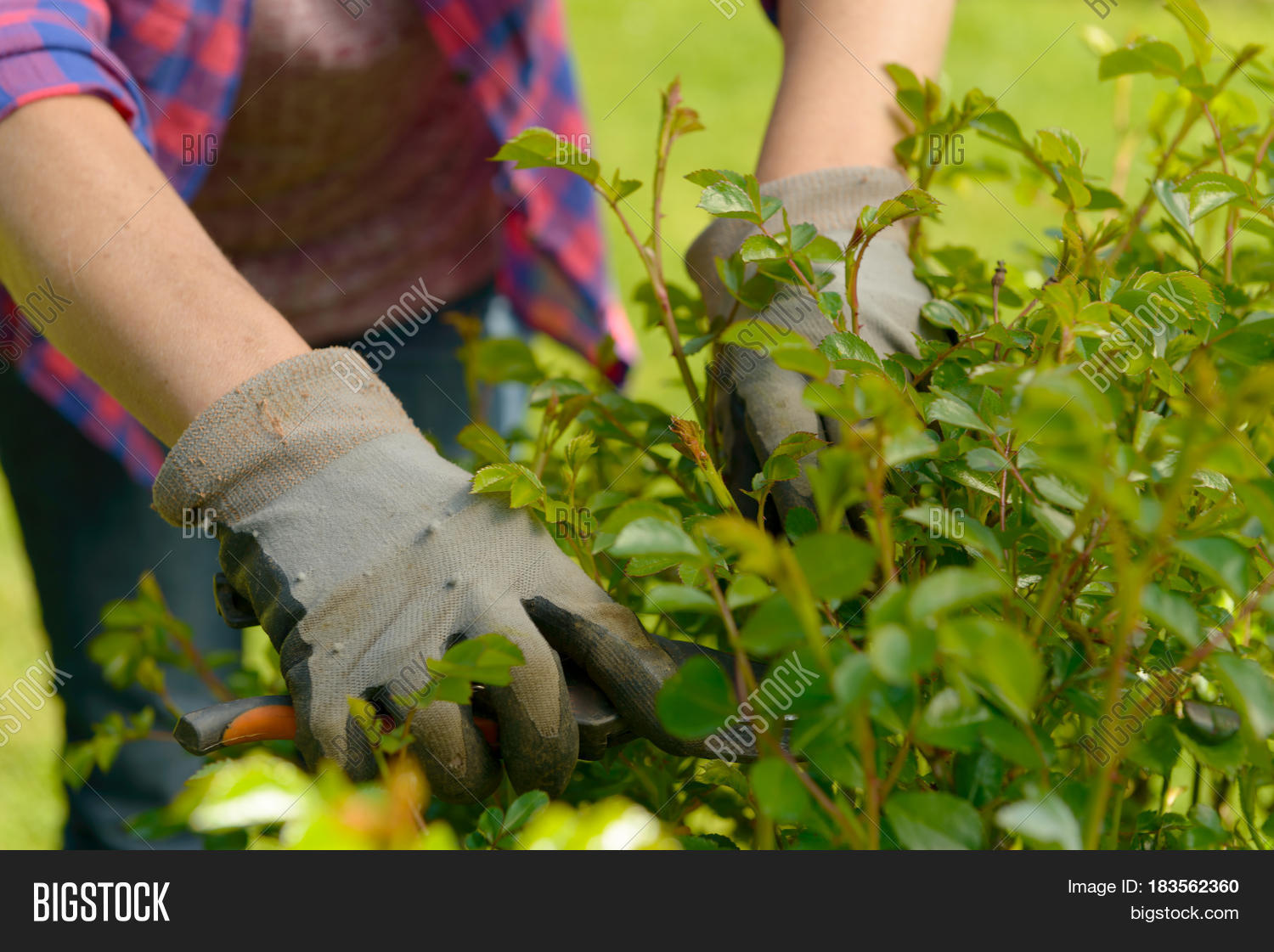 Hands woman gardening her beautiful image photo bigstock for Big hands for gardening