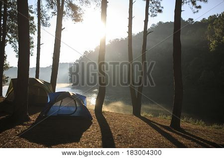 Tent Under The Pine Forest At Morning Against The Bright Sunlight.