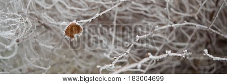 Lonely leaf on Fine Thin branches covered with hoarfrost