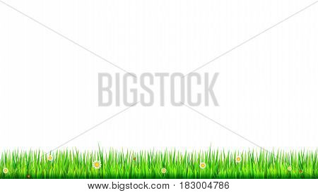 Green, natural grass border with white daisies, camomile flower and small red ladybug on white background. Template for your design or creativity.
