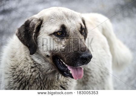 Dog-head pictures, dog-looking dog pictures, emotional-looking dog pictures