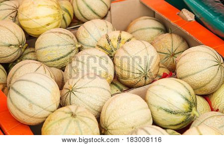 Closeup on charentais melons at farmer's market