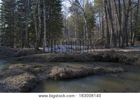 Small siberian river flows in siberian taiga forest.
